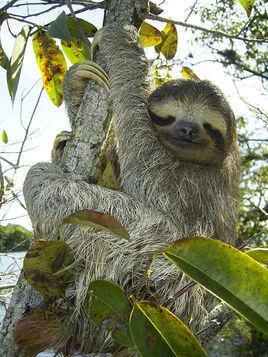 疯狂动物城 史上最. 小树懒拼读 v.s. 自然拼读