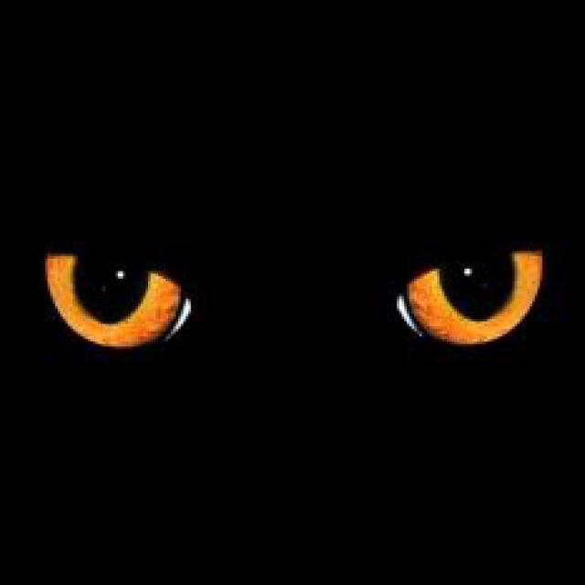 邪猫劫-鬼故事-悬疑-恐怖-