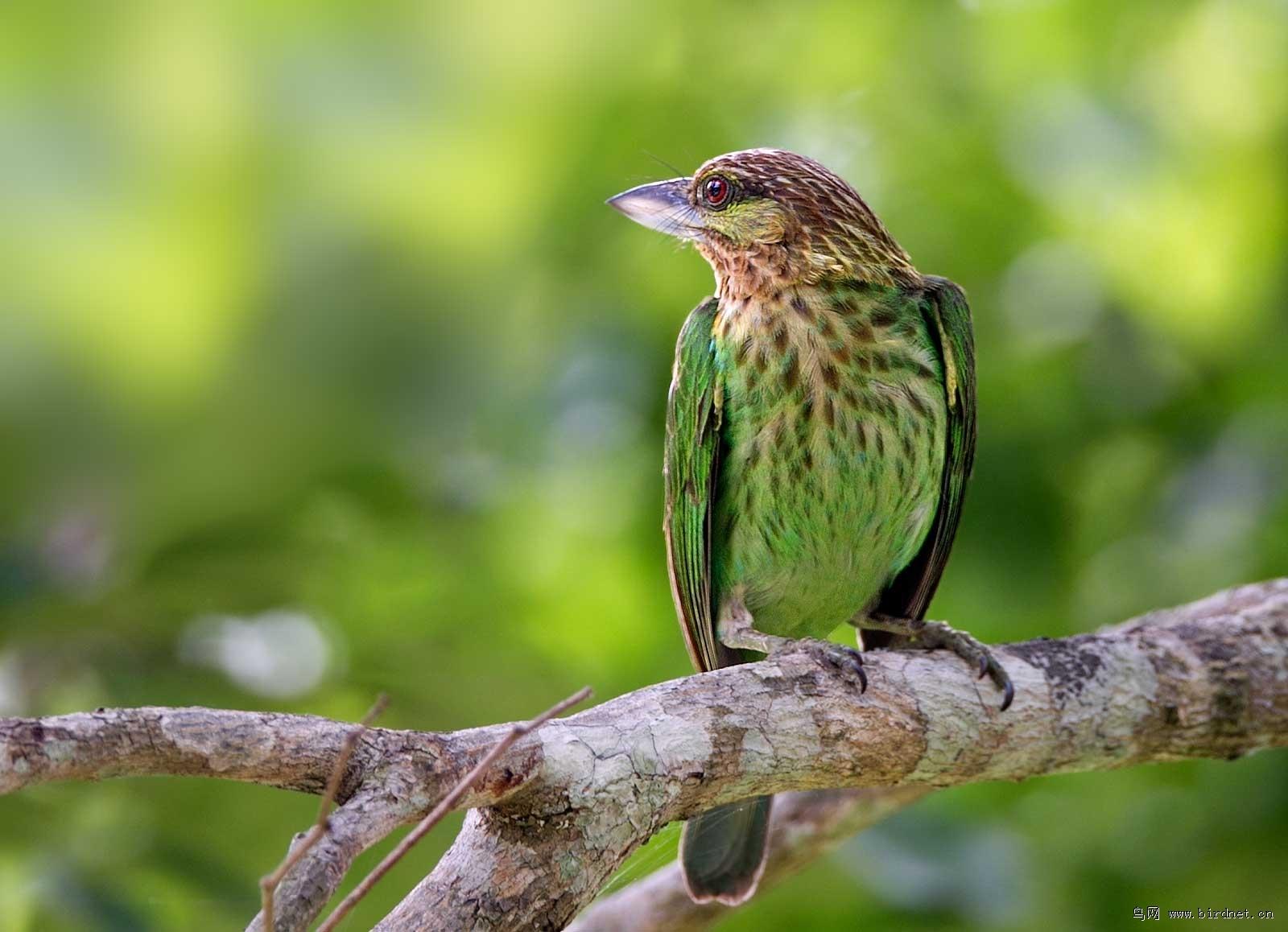 壁纸 动物 鸟 鸟类 雀 1600_1158