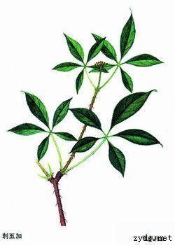 背景 壁纸 绿色 绿叶 树叶 植物 桌面 250_350 竖版 竖屏 手机