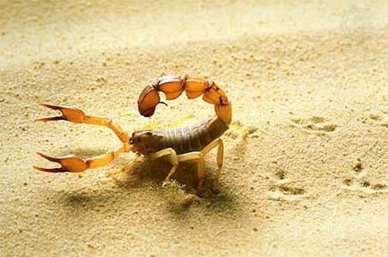 沙漠动物_360百科
