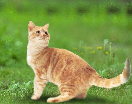 壁纸 动物 狗 狗狗 猫 猫咪 小猫 桌面 451_356