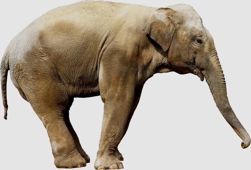 3dmax大象木雕贴图
