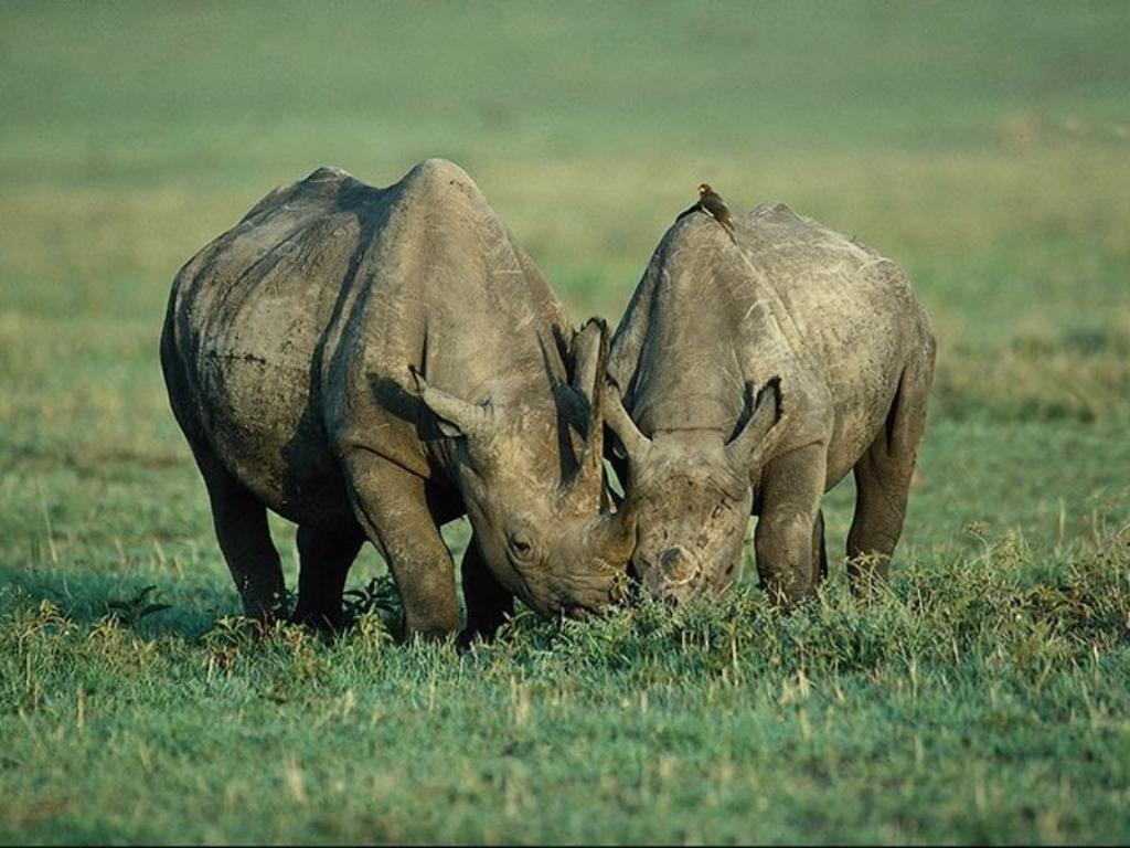 穿衣服的动物犀牛