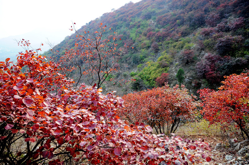 山东蒙山国家森林公园