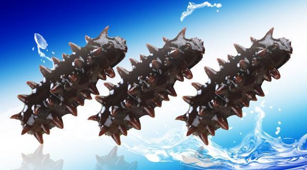 约有二十余种海参可供食用,海参同人参,燕窝,鱼翅齐名,是世界八大珍品